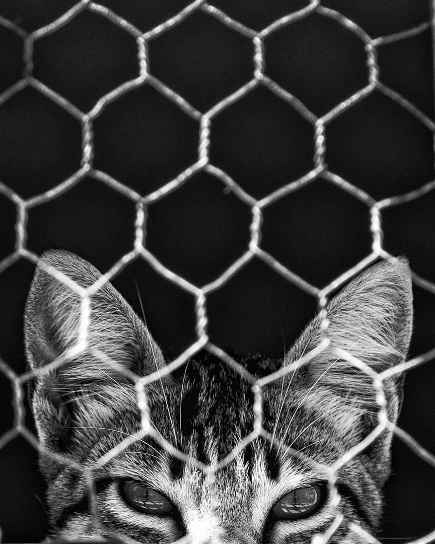 Cat Destiny, Sines, Portugal. 2019
