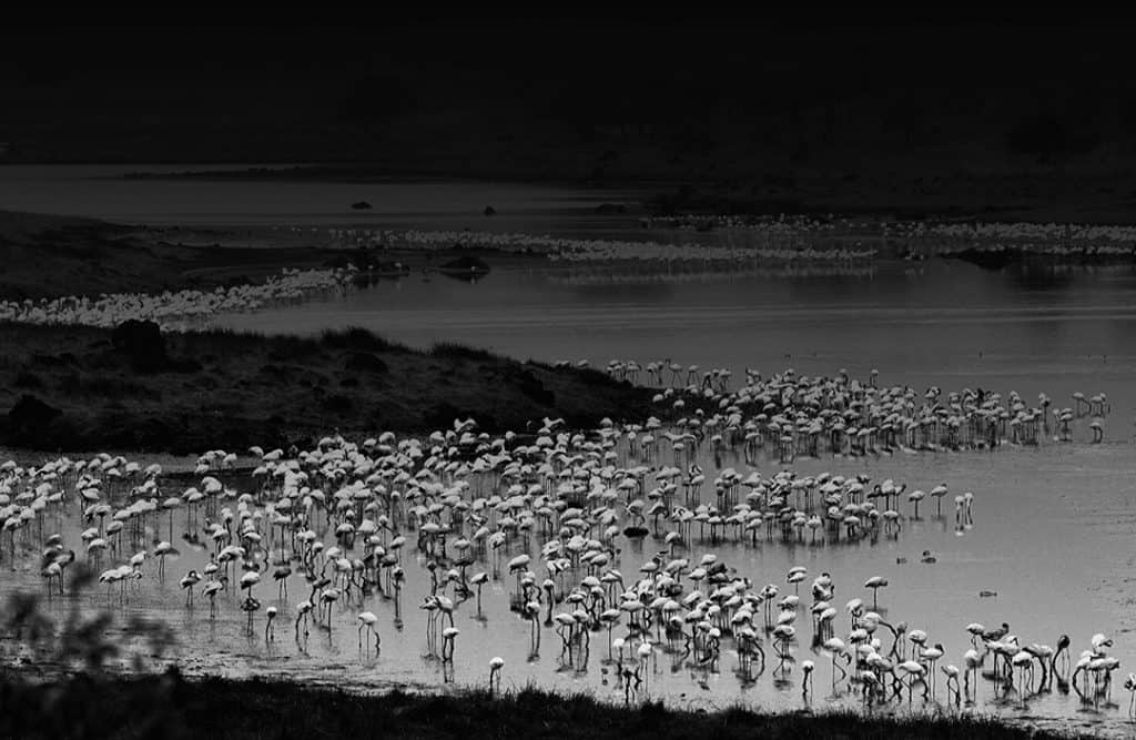 Flaming meeting, Arusha National Park, Tanzania. 2003