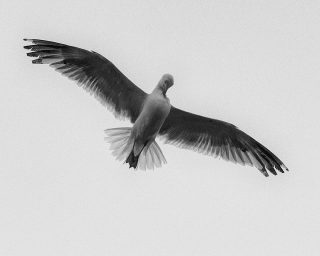 Itch in flight, Sines, Portugal. 2020