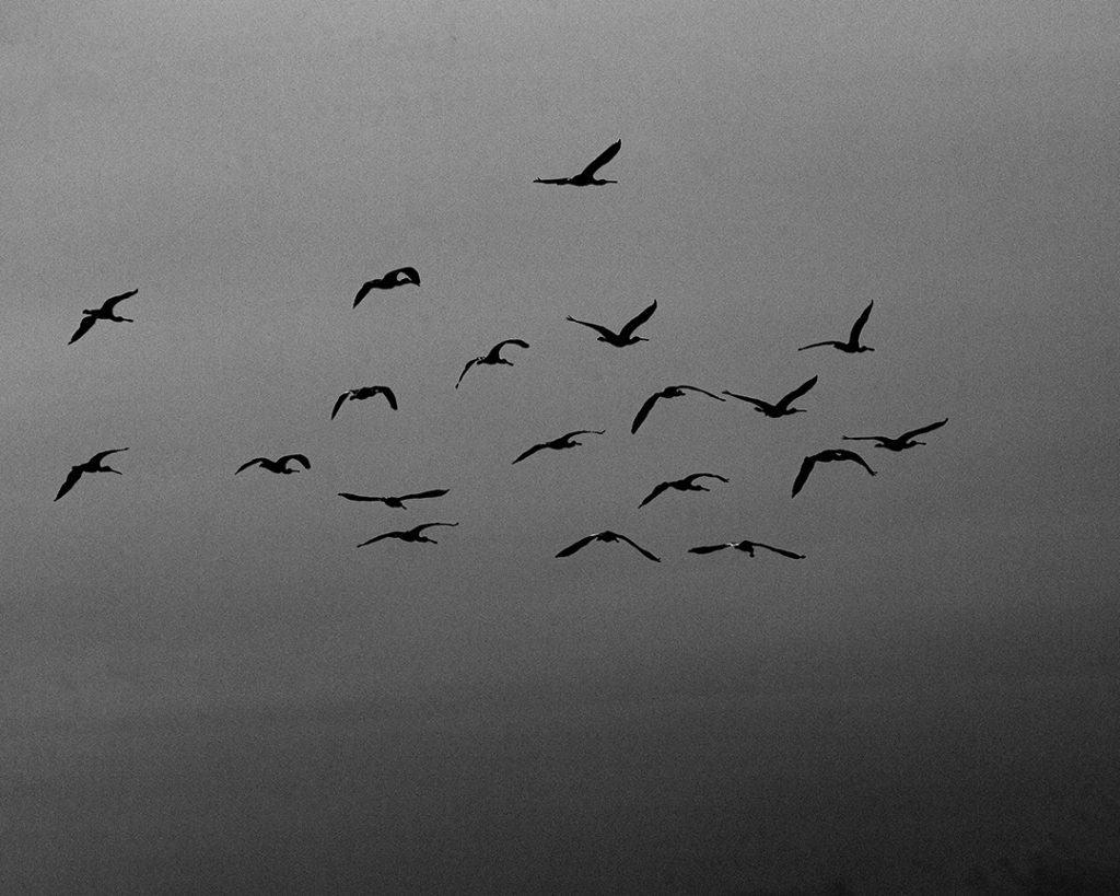 Nineteen Birds, Torre, Portugal. 2020