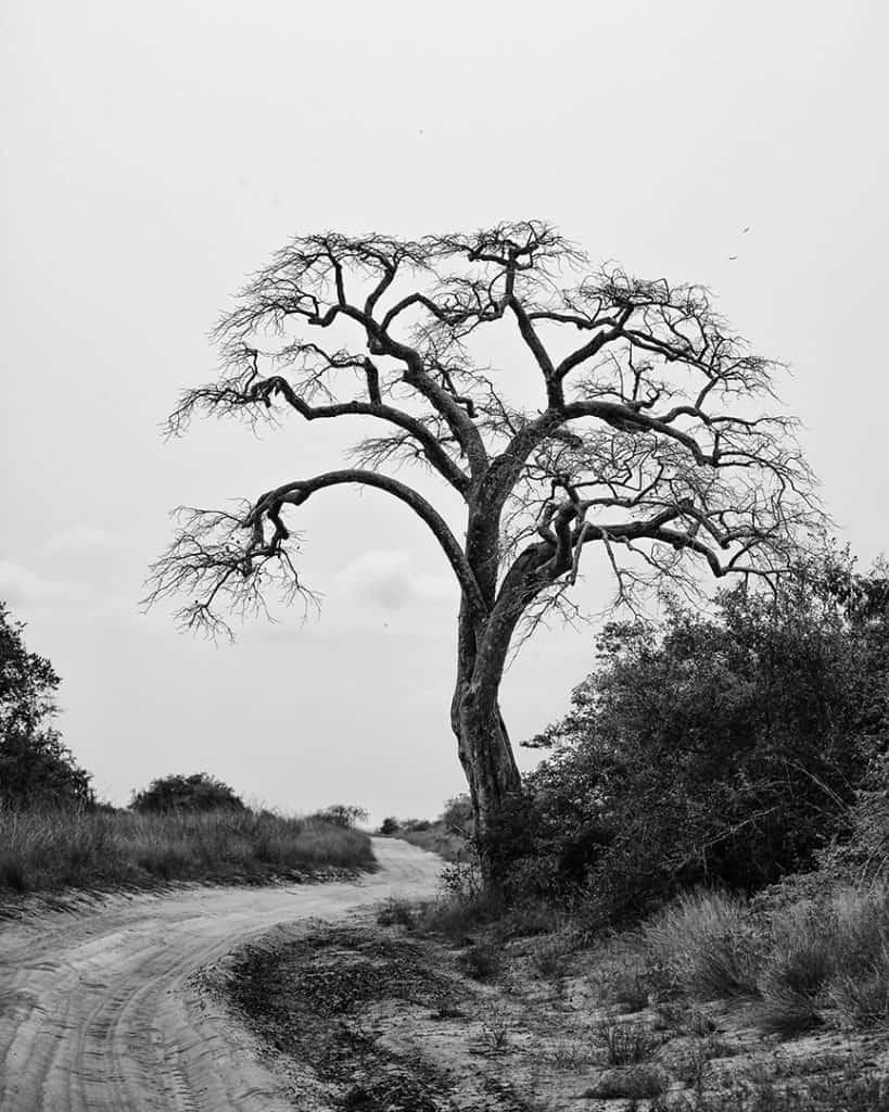 Quiçama National Park, Luanda, Angola. 2014