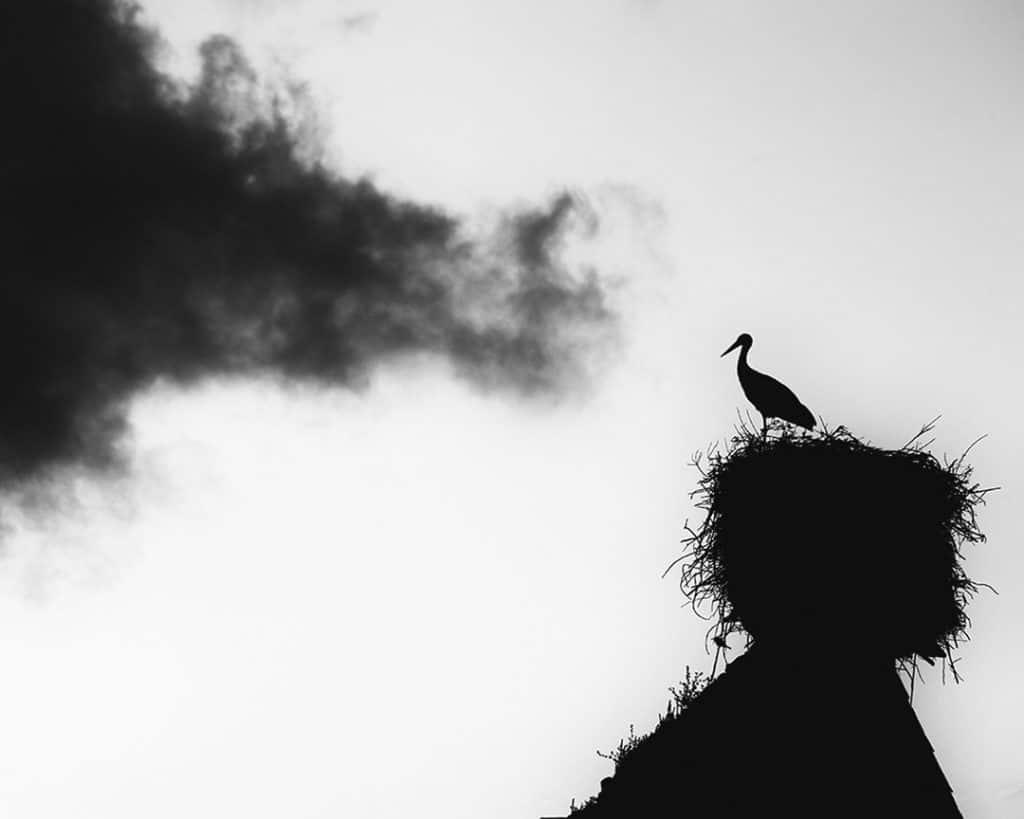Stork Study # 18, Casoto, Sines, Portugal. 2020