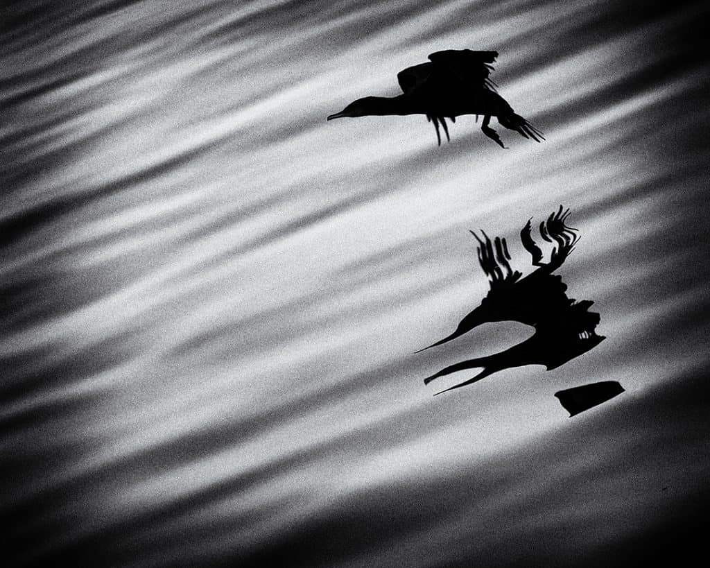 Cormorant Abstract, Study 1, Sines, Portugal. 2020