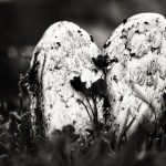 Mushroom Love, Czech Republic. 2003