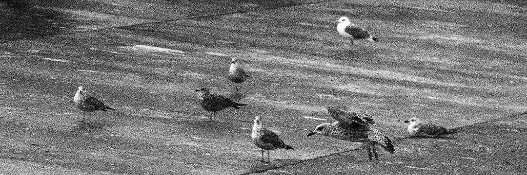 Seven birds, Sines, Portugal. 2020