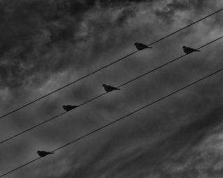 Five Birds, Sines, Portugal. 2020