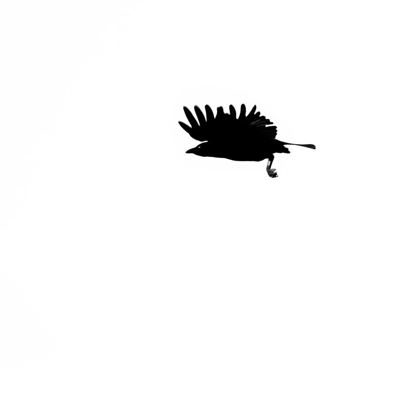 Crow Study 44, Sines. 2121