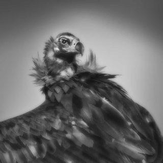 Vulture in Classic Hollywood Glamour, Torrejon El Rubio, Spain. 2021